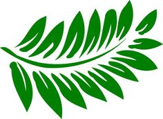 1000+ images about Ferns on Pinterest