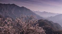 tree mountain landscape hd wallpapers download