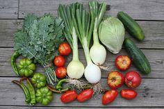 Paleo - Eat Lots of Vegetables