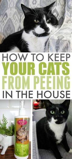 If you have indoor cats, then you'll definitely want to know how to keep cats from peeing in the house. This is a problem that can come up suddenly, even with cats you've had for years.