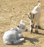 Clark's Elioak Farm - A petting farm in the heart of Howard County