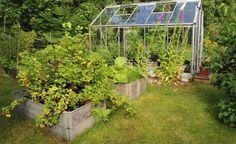Werden Beerensträucher erhöht gepflanzt, fällt die Ernte leichter und die Beeren liegen nicht auf dem Boden auf, wo sie leicht matschig werden und faulen