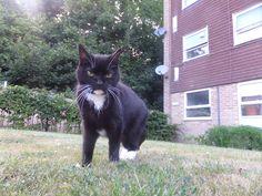 Herbie Cat | Pawshake Haywards heath