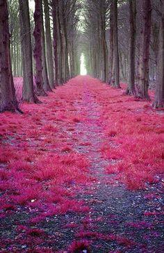 um caminho encantado...digno de um conto de fadas!