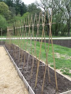 Trellis Designs - Seed Savers Exchange - which designs work better for certain types of plants