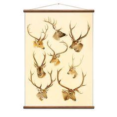 MONOQI   Deer Karte
