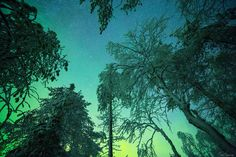 Last night forest Nov Lapland, Finland by Tiina Törmänen Tree Forest, Night Forest, Forest View, Out Of This World, Northern Lights, Nova, Australia, Landscape, Nature