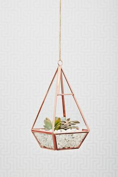Oola Rose Gold Terrarium maybe for in the veranda?