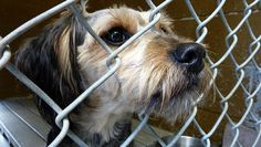 Apalling!!!!!!!!!!!     About 5 million to 7 million animals enter U.S. shelters each year, and 3 million to 4 million of them are euthanized, according to the ASPCA.