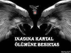 Beşiktaş Karakartal Resimleri