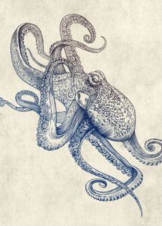 A Canvas featuring the Octo Flow by rachelcaldwell for high quality art with super fast delivery and discount offers. Ant Drawing, Octopus Drawing, Octopus Painting, Octopus Tattoo Design, Octopus Tattoos, Octopus Art, Half Sleeve Tattoos Ocean, Unique Half Sleeve Tattoos, Kraken Tattoo