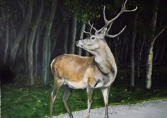 The Stag . Oil on Canvas 50 X 70 cm Fresh off the easel from a reference photo by Sarah Gehrig (Photos for Artists) Easel, Oil On Canvas, Giraffe, Paintings, Horses, Artists, Fresh, Photos, Animals