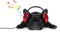Photo about French bulldog dog listening to music with earphones or headphones,while relaxing or sleeping on the floor, isolated on white background. Image of hear, headphones, animal - 56623624 Power Yoga, Couple Hands, Amazon Prime Day, Thunderstorms, Dog Photos, Listening To Music, Animal Photography, Cute Dogs, Headphones