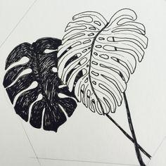 Monstera deliciosa oftewel Vingerplant Illustratie