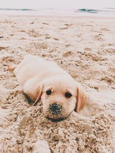 14 Lovely Photos Of Golden Retrievers Spending Time Near the Sea | Page 3 of 4 | PetPress