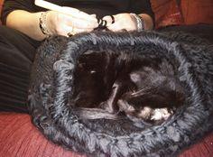 Kattenmand, gelijk getest en goedgekeurd...