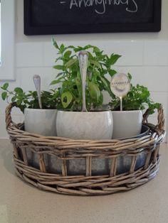 Kitchen Herb Garden Ideas (12 Pics)
