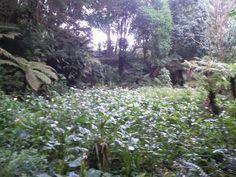 Naturaleza en el Jardin de los 100 Años