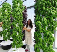 The GreenHouse -- Vertical farming produces organic greens and herbs using 5% of the water conventional farming uses.