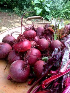 Beet, my voortrek-kind vir die winter Slow Living, Beets, Onion, Recipies, Veggies, Winter, Gardening, Life, Recipes