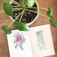 So excited to announce the launch of my first zine titled Sweet Plants and Pink Feelings. Its a 20 page zine containing all my favourite plants and illustrated by me . Its now for sale in my online shop! Illustrators On Instagram, Zine, Product Launch, Feelings, My Favorite Things, Sweet, Illustration, Artist, Shop