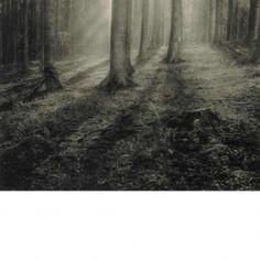Leonard Misonne - Untitled, Landscape