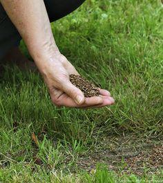 Spécial Garnissage gazon, graine de pelouse - En pratique | Détente Jardin