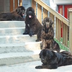 The Welcoming Committee..used to look like my house...all on the window sill or deck waiting for me to come home..