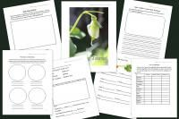 Printable Garden Journal for Kids {20 Pages} from The Educators' Spin On It