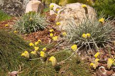 Australian Garden Design, Native Australians, Native Plants, Habitats, Landscape Design, Wildlife, Outdoor, Outdoors, Landscape Designs