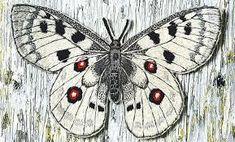 ulla pohjola – Google-haku Moth, Insects, Google, Animals, Animales, Animaux, Animal, Animais