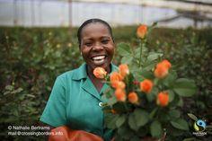 fairtrade.ca ~ media fairtrade%20canada materials%20%20resources producer%20images flowers%20-%20girdport%20flower%20farm%20-%20zimbabwe.jpg