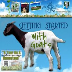 Getting Started With Goats All FREE!!! Download the E-book of DIY colletions with this, Click the website button. #babygoatfarm