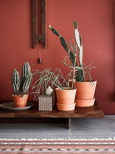 Terracotta pots, dark wood furniture and earthy colors is a trend we're super keen on. Room Colors, House Colors, Colorful Decor, Colorful Interiors, Color Terracota, Dark Wood Furniture, Colour Architecture, Diy Décoration, Mid Century Decor