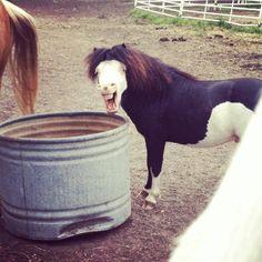 Horse teeth! makes me laugh ;)