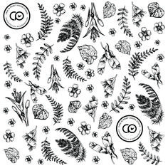 Botanical black and white illustration. Beeswax wrap design. New Zealand native flowers and plants.