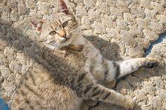 Hello Pussycat by Csaba Friss