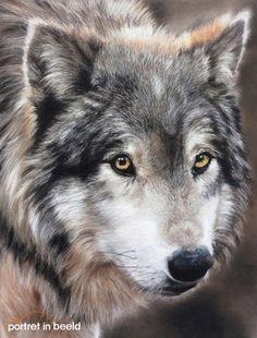 portretinbeeld-wolf.jpg 396×521 pixels