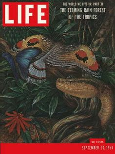 "Rain Forests - Life Magazine, September 20, 1954 -Visit  http://www.oldlifemagazines.com/the-1950s/1954/september-20-1954-life-magazine.html?q= to purchase this issue of Life Magazine. Enter ""pinterest"" for a 12% discount at checkout - Rain forests"