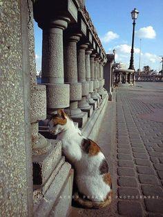 Tripoli #cat