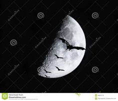 Bats Flying In The Moonlight Stock Images - Image: 20927324