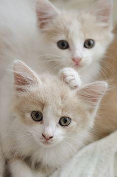 evan-rickar:  Feline