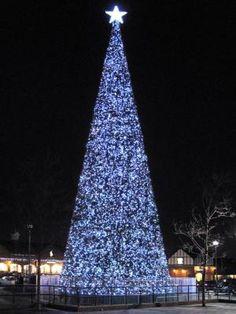 Tallest  Tree at Christmas. #imdreamingof @Radley London