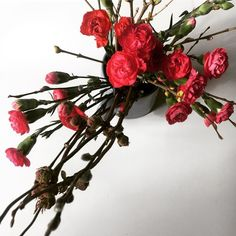 Kevät! Olen tainnut kävellä muutaman viikon laput silmillä koska havahduin yhtä-äkkiä siihen että vuoden paras aika on jo täällä. Takapihan metsässä puiden silmut ovat turvonneet ja niistä pilkistää hentoja lupauksia kesästä.  #kevät #spring #kukat #flowers #nature #instaflower #kukkakimppu #neilikka #home #myhome #koti #hem