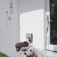 Outdoor shower for dogs.