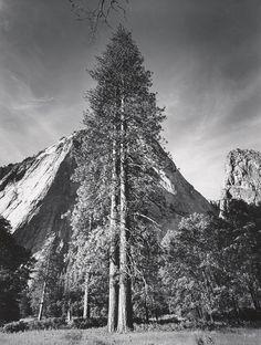 Trees and Cliffs, Yosemite National Park, California (1954)