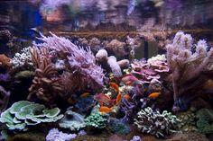 Fische und andere Tierarten als letzter Schritt im Aquarium einsetzen