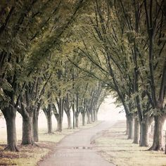 Tree-lined drives