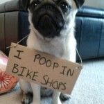 Dog shaming... It's so silly but makes me smile.