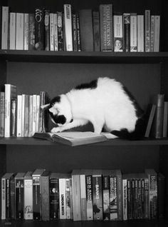 My World in Black and White Cute Cats And Kittens, I Love Cats, Funny Animal Pictures, Great Pictures, Gatos Cat, Cat Reading, Reading Books, Beautiful Cats, Cat Lady